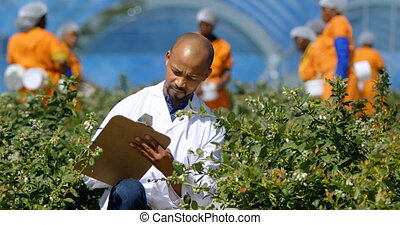 Man writing on clipboard in blueberry farm 4k - Front view ...