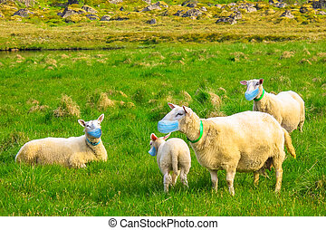 manada, cara, sheeps, máscara