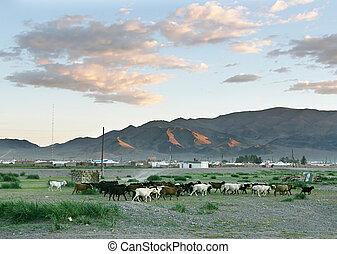 manada, de, cabras