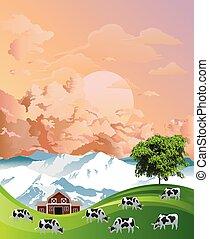 manada, pasto, amanecer, vacas