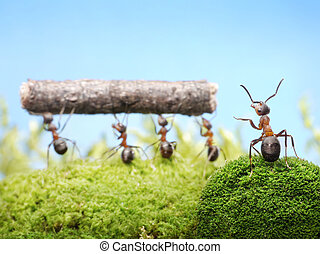 management of ants teamwotk - head manages ants team work