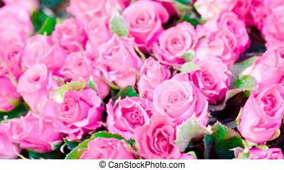 mancha, de, rosa subió, textura, plano de fondo