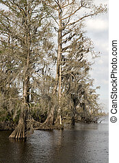 Manchac Swamp - cypress swamp, North Pass, Manchac,...