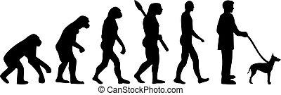 manchester, evolución, terrier