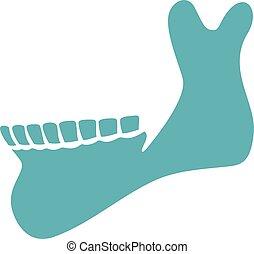 mandíbula, ilustração, vetorial, human, (skeleton), osso