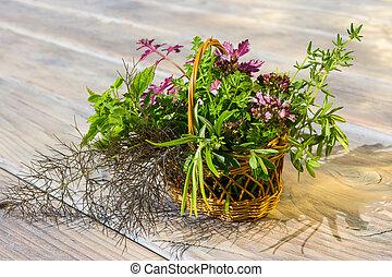 mand, herbs., closeup, het helen