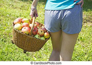 mand, meisje, tuin, appeltjes , jonge