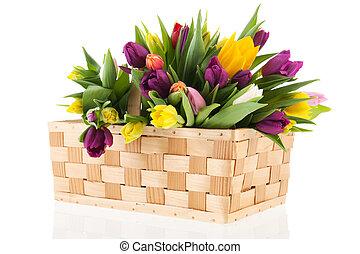 mand, tulpen