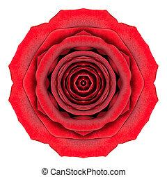 Mandala Rose Flower Kaleidoscope Isolated on White