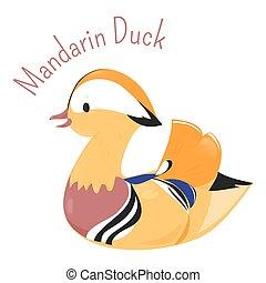 Mandarin duck isolated on white