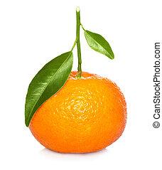 mandarin, feuille, vert, isolé