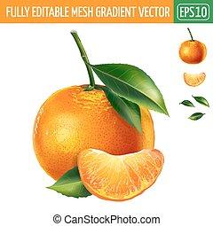 Mandarin on white background. Vector illustration