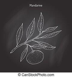 Mandarin orange branch