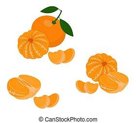 Mandarin, tangerine, clementine with leaves isolated on white background. Citrus fruit. Vector Illustration