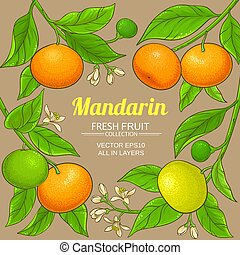mandarin vector frame
