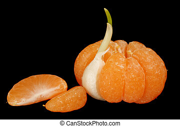 Mandarin with garlic clove - Mandarin with one segment...