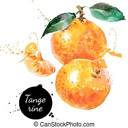mandarine, main, aquarelle, fond, dessiné, blanc, peinture