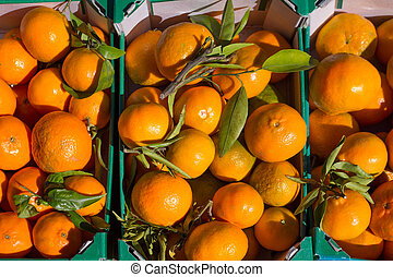 mandarine, paniers, fruits, orange, récolte, rang