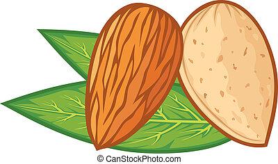 mandel, mit, blätter, (almond, nut)