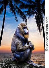 Mandrill Monkey portrait at sunset. Portrait of a mandrill.