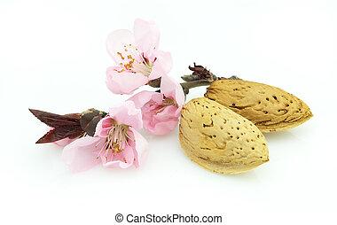 mandulák, noha, rózsaszínű virág