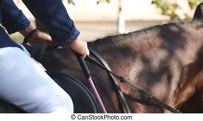 manege., équitation, lent, cheval, courant, unrecognizable, cou, brun, sport., galoper, jockey, grand plan, professionnel, formation, purebred, mouvement, ou, équestre, horseback., jument, competition.