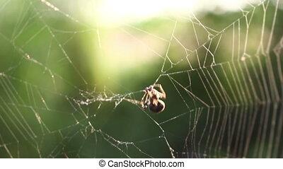 manger, araignés, victime
