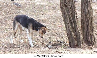 manger, arbre, chien, errant, sous