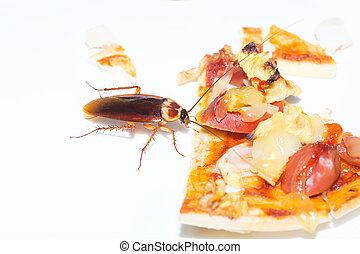 manger, arrière-plan., (expired, blanc, cafard, pizza), pizza