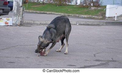manger extérieur, viande, chien parasite, morceau, os
