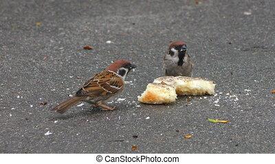 manger, oiseaux, miettes, pain