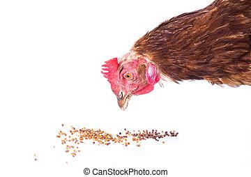 manger, poulet
