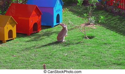 manger, séance, leaves., jaune, arbre, lapin, petit