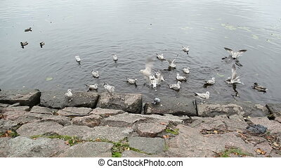manger, vyborg., littoral, autres, crumbs., mouette, pain, ...