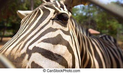 manger, zebra, zoo