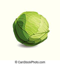 mangiare, bianco, verde, isolato, succoso, vegetariano, sano, fondo., fresco, cibo., cavolo