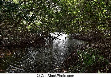 mangles, por, árboles, canal