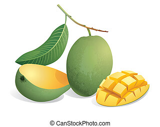 Mango Fruit - Realistic vector illustration of mangoes and a...