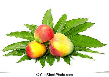 Mango fruit with leaf
