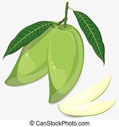 mango - Mango. Fruit illustration