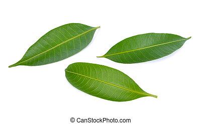 Mango leaf isolated on white background