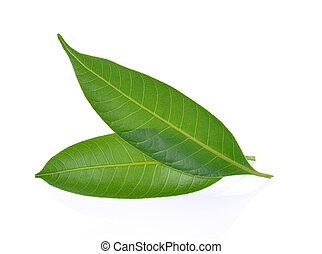 Mango leaf on a white background