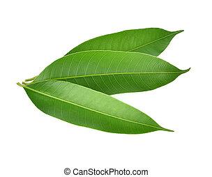 Mango Leaves on white background