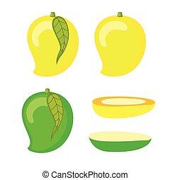 Mango Section Vector