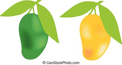 mango set on white background
