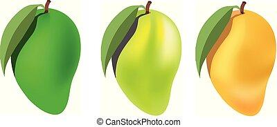 mango set on white background