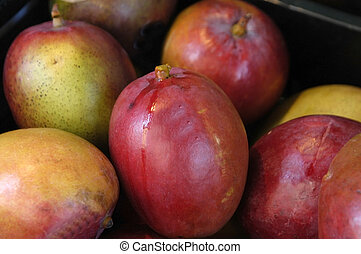 mangoes in a fruit