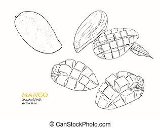 mangoes., komplet, vector., rys, ręka, zaciągnąć