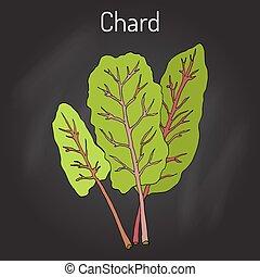 Mangold Beta vulgaris or Swiss chard