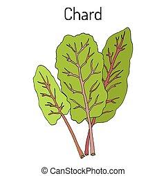 Mangold Beta vulgaris or Swiss chard, silverbeet, spinach...